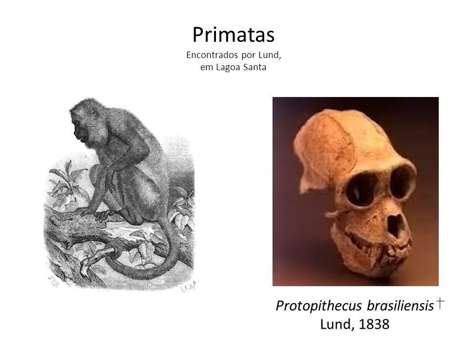 Protopithecus brasiliensis Lund, 1838 Primatas Encontrados por Lund, em Lagoa Santa