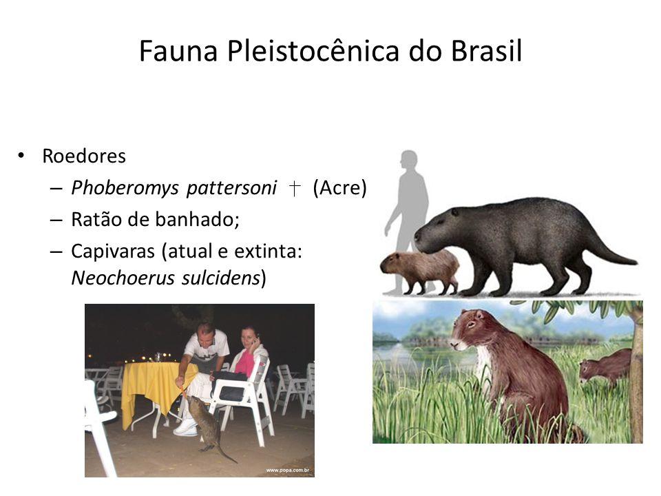 Roedores – Phoberomys pattersoni (Acre) – Ratão de banhado; – Capivaras (atual e extinta: Neochoerus sulcidens) Fauna Pleistocênica do Brasil