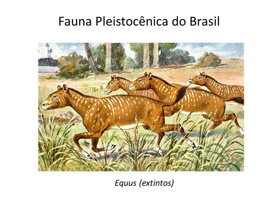 Equus (extintos)