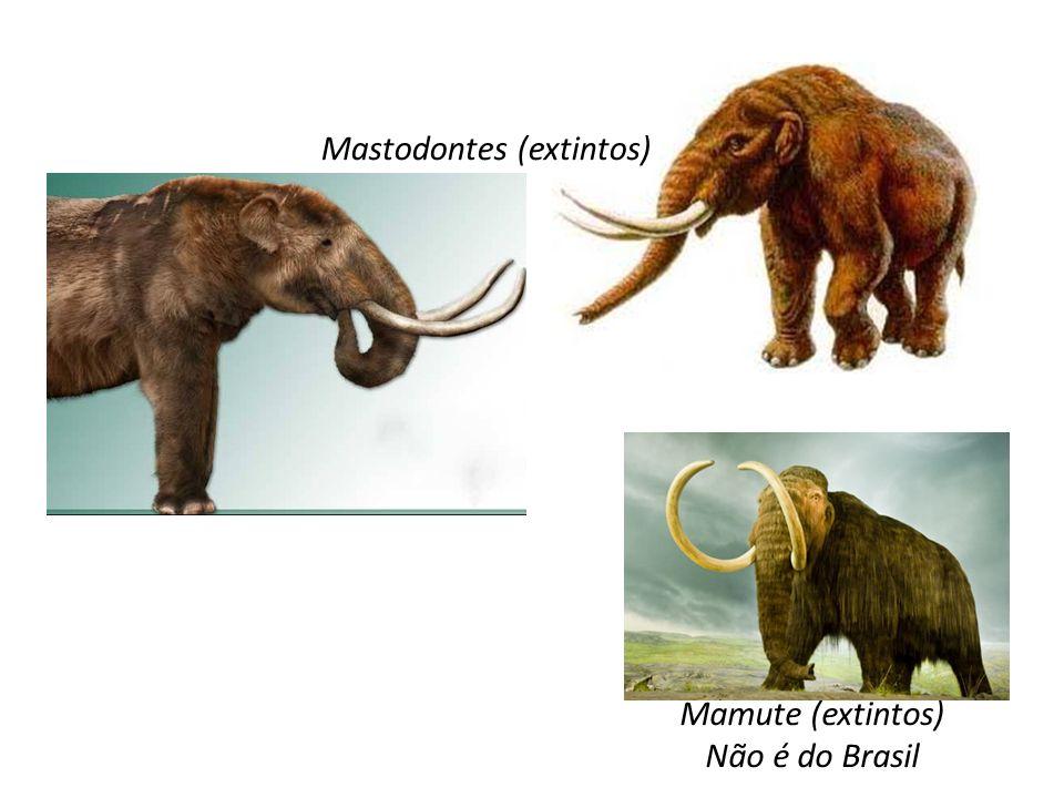 Mastodontes (extintos) Mamute (extintos) Não é do Brasil
