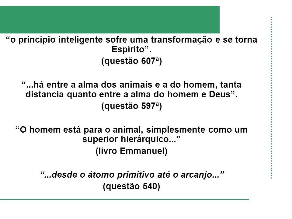 o princípio inteligente sofre uma transformação e se torna Espírito. (questão 607ª)...há entre a alma dos animais e a do homem, tanta distancia quanto