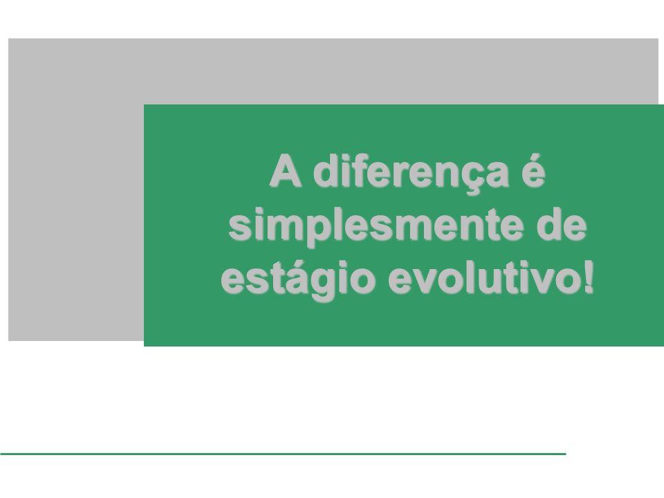 A diferença é simplesmente de estágio evolutivo!