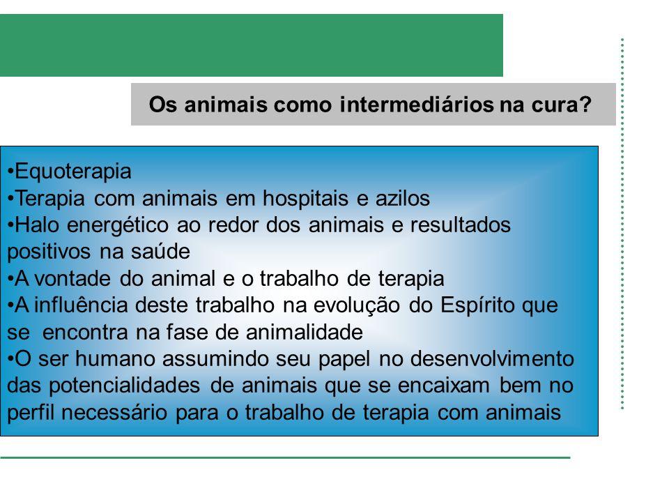 Os animais como intermediários na cura? Equoterapia Terapia com animais em hospitais e azilos Halo energético ao redor dos animais e resultados positi