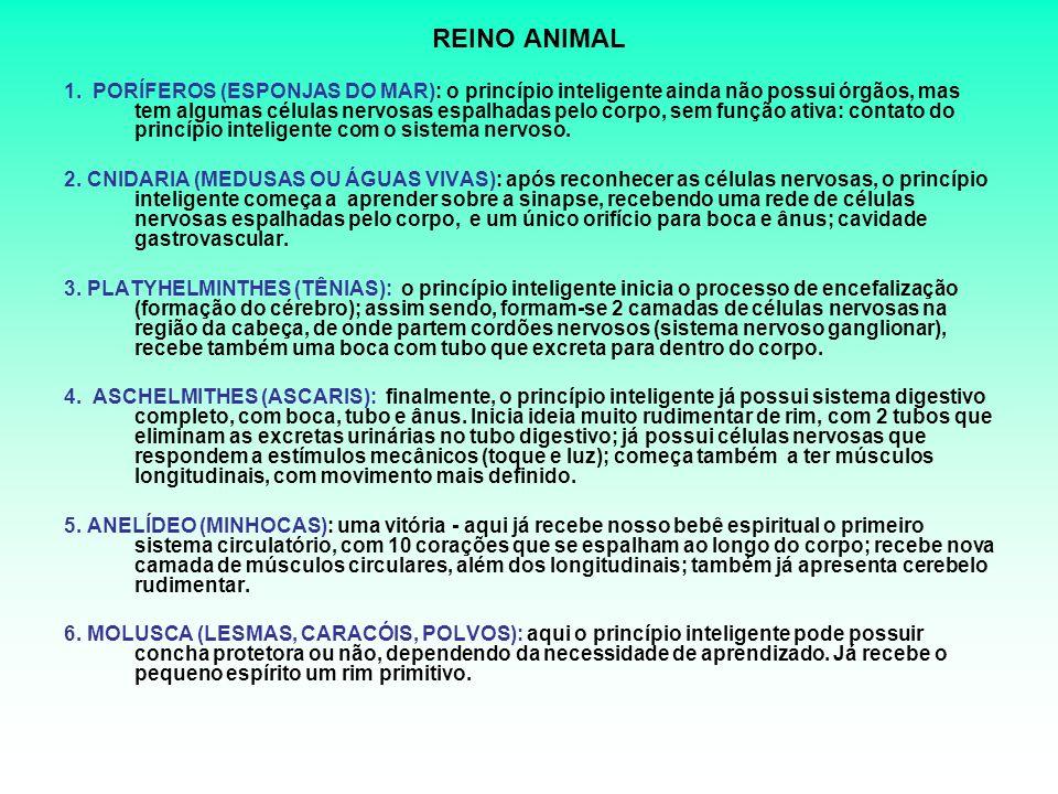 REINO ANIMAL 1.