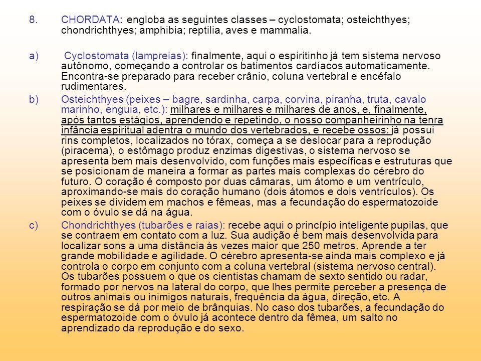 8.CHORDATA: engloba as seguintes classes – cyclostomata; osteichthyes; chondrichthyes; amphibia; reptilia, aves e mammalia.