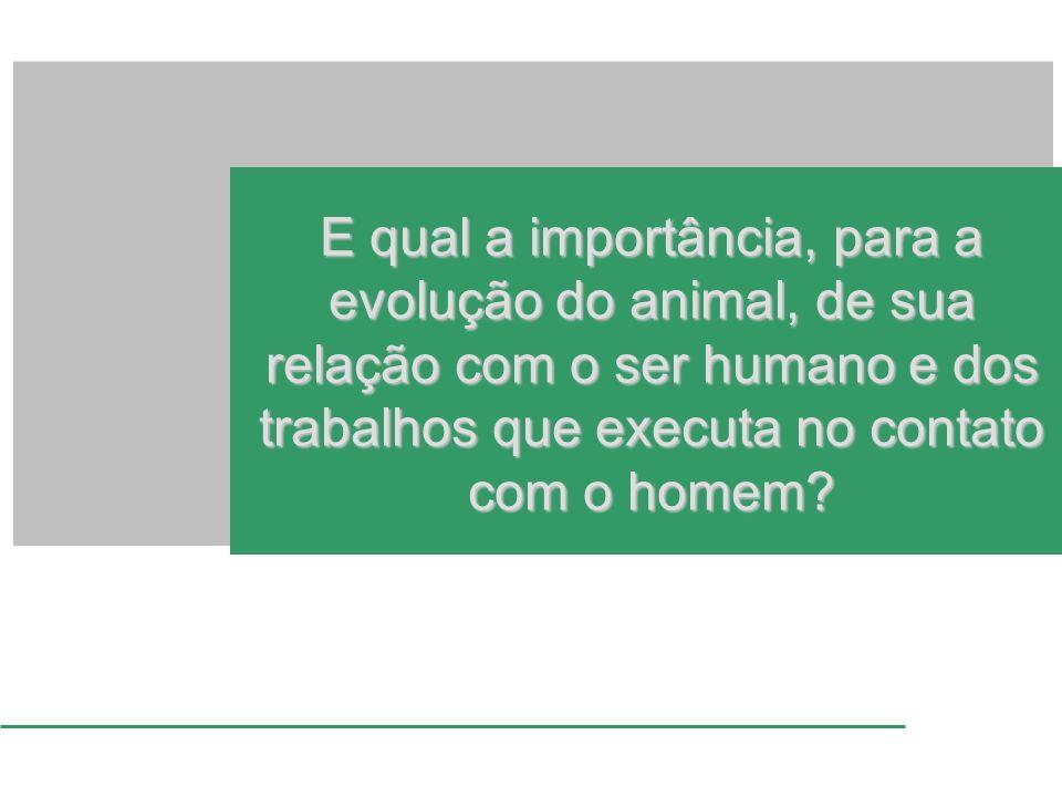 E qual a importância, para a evolução do animal, de sua relação com o ser humano e dos trabalhos que executa no contato com o homem?
