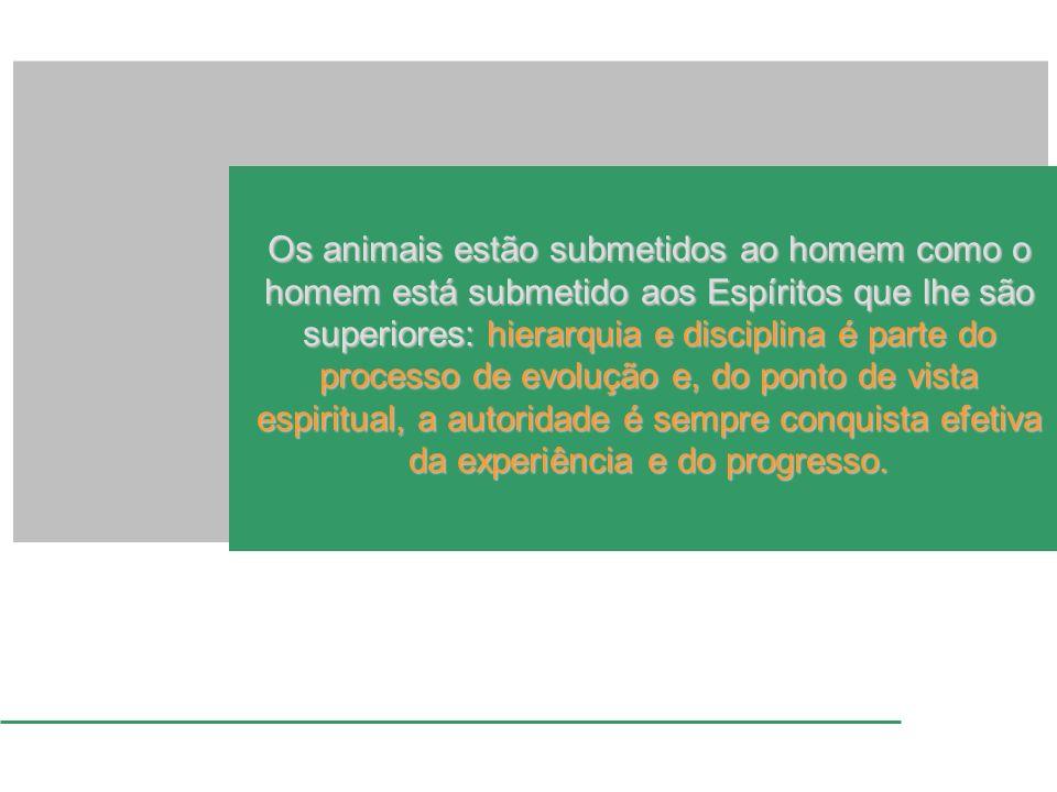 Os animais estão submetidos ao homem como o homem está submetido aos Espíritos que lhe são superiores: hierarquia e disciplina é parte do processo de