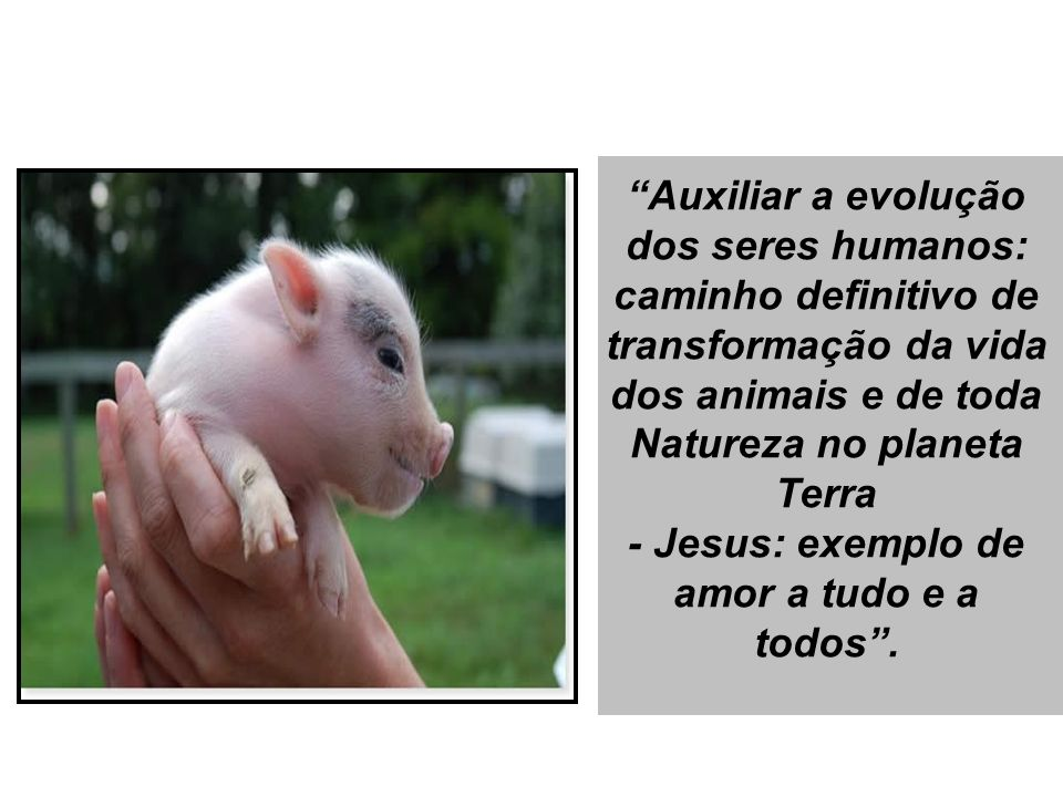 Auxiliar a evolução dos seres humanos: caminho definitivo de transformação da vida dos animais e de toda Natureza no planeta Terra - Jesus: exemplo de