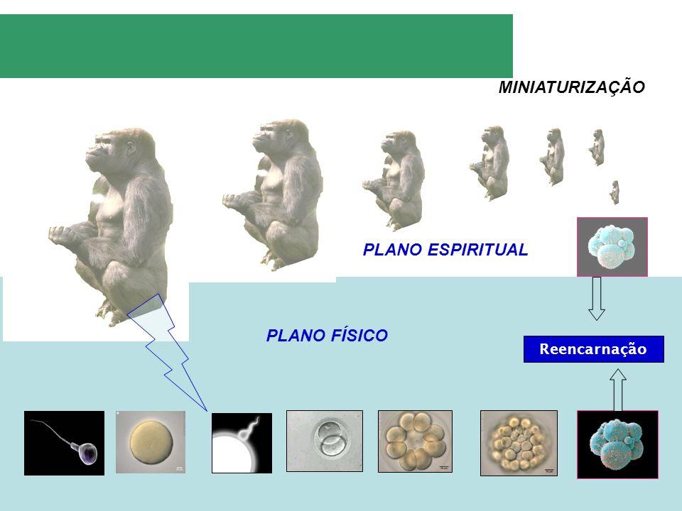 Reencarnação PLANO FÍSICO PLANO ESPIRITUAL MINIATURIZAÇÃO