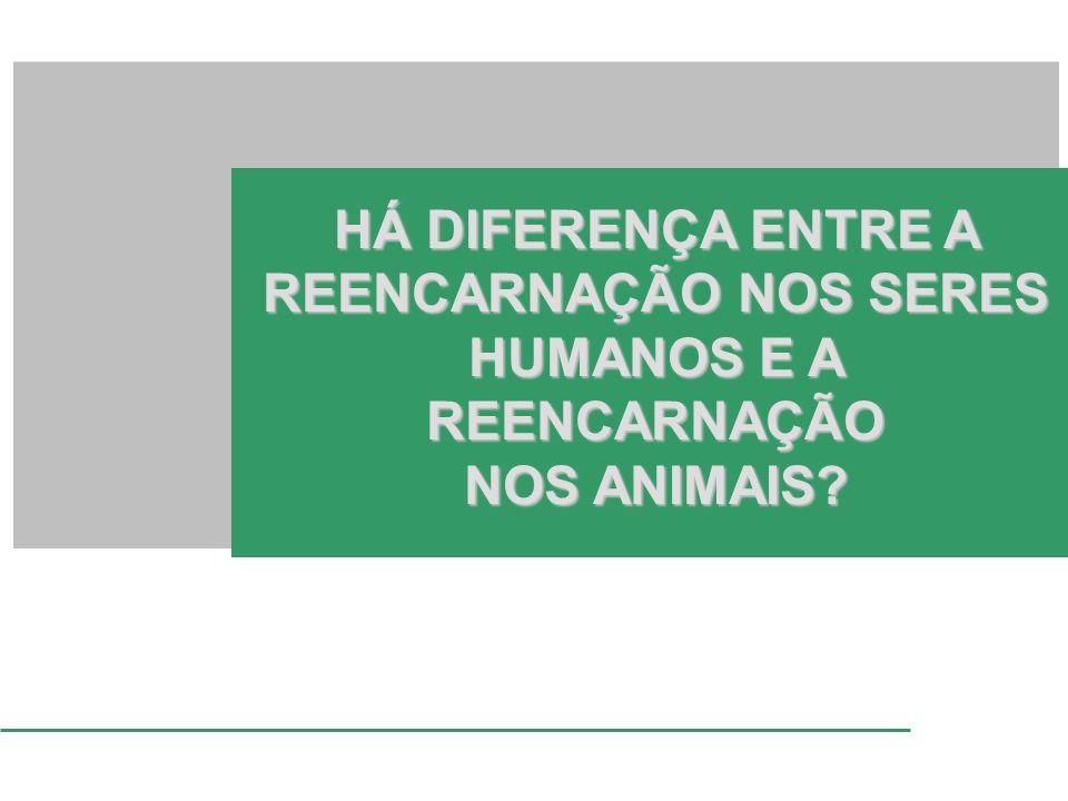 HÁ DIFERENÇA ENTRE A REENCARNAÇÃO NOS SERES HUMANOS E A REENCARNAÇÃO NOS ANIMAIS?