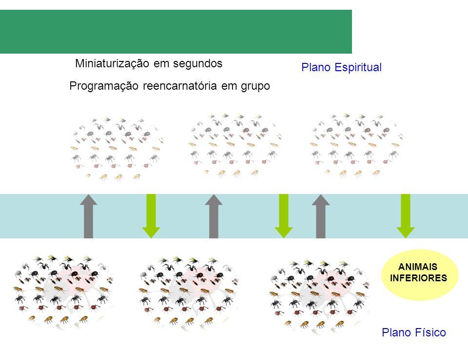 Plano Espiritual Plano Físico Miniaturização em segundos Programação reencarnatória em grupo ANIMAIS INFERIORES