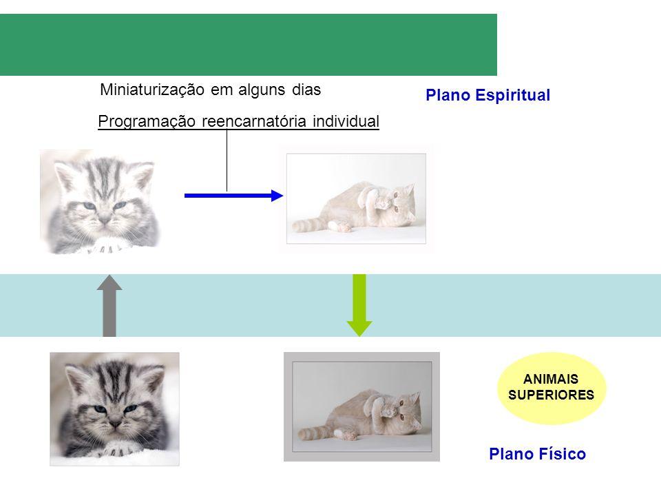 Plano Espiritual Plano Físico Miniaturização em alguns dias Programação reencarnatória individual ANIMAIS SUPERIORES