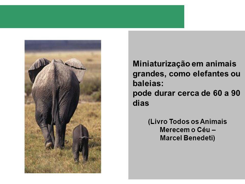 Miniaturização em animais grandes, como elefantes ou baleias: pode durar cerca de 60 a 90 dias (Livro Todos os Animais Merecem o Céu – Marcel Benedeti