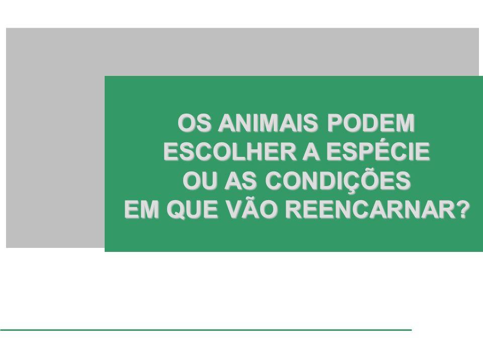 OS ANIMAIS PODEM ESCOLHER A ESPÉCIE OU AS CONDIÇÕES EM QUE VÃO REENCARNAR?