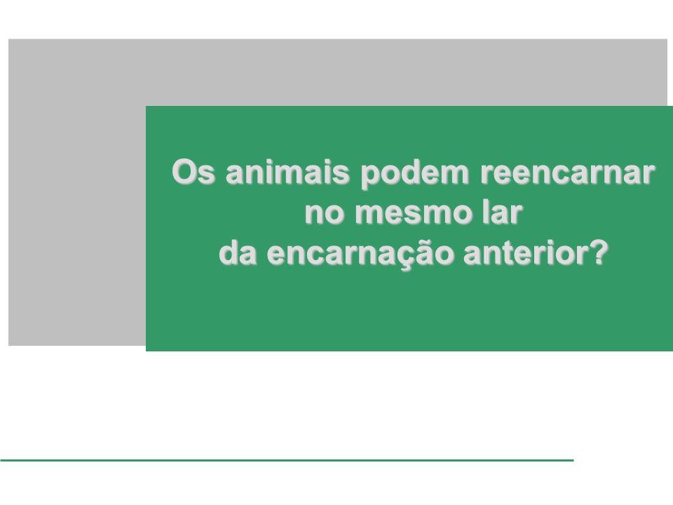 Os animais podem reencarnar no mesmo lar da encarnação anterior?