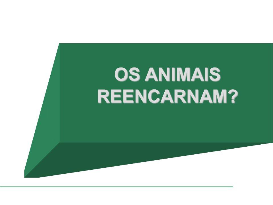 OS ANIMAIS REENCARNAM?