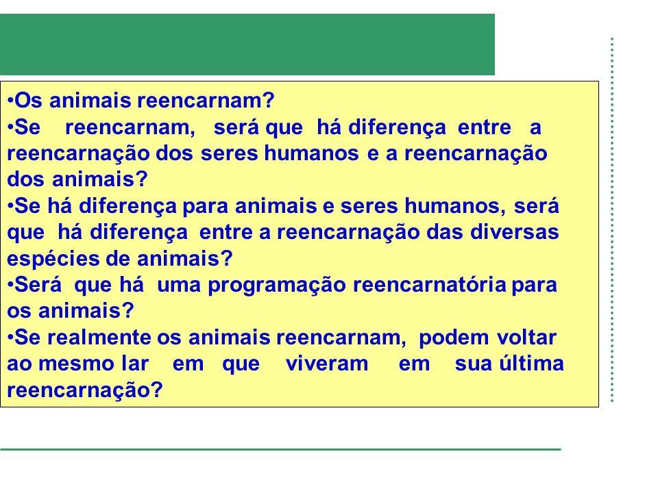 Os animais reencarnam? Se reencarnam, será que há diferença entre a reencarnação dos seres humanos e a reencarnação dos animais? Se há diferença para