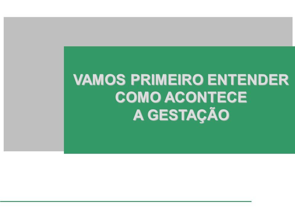 VAMOS PRIMEIRO ENTENDER COMO ACONTECE A GESTAÇÃO