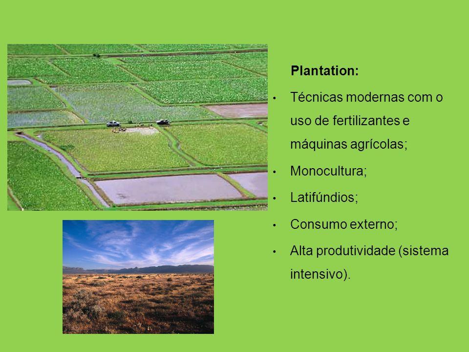Agricultura Subsistência: Técnicas arcaicas como o uso de queimadas, gerando o esgotamento prematuro do solos; Policulturas; Minifúndios; Consumo inte