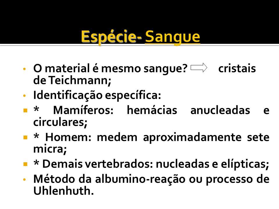 O material é mesmo sangue? cristais de Teichmann; Identificação específica: * Mamíferos: hemácias anucleadas e circulares; * Homem: medem aproximadame