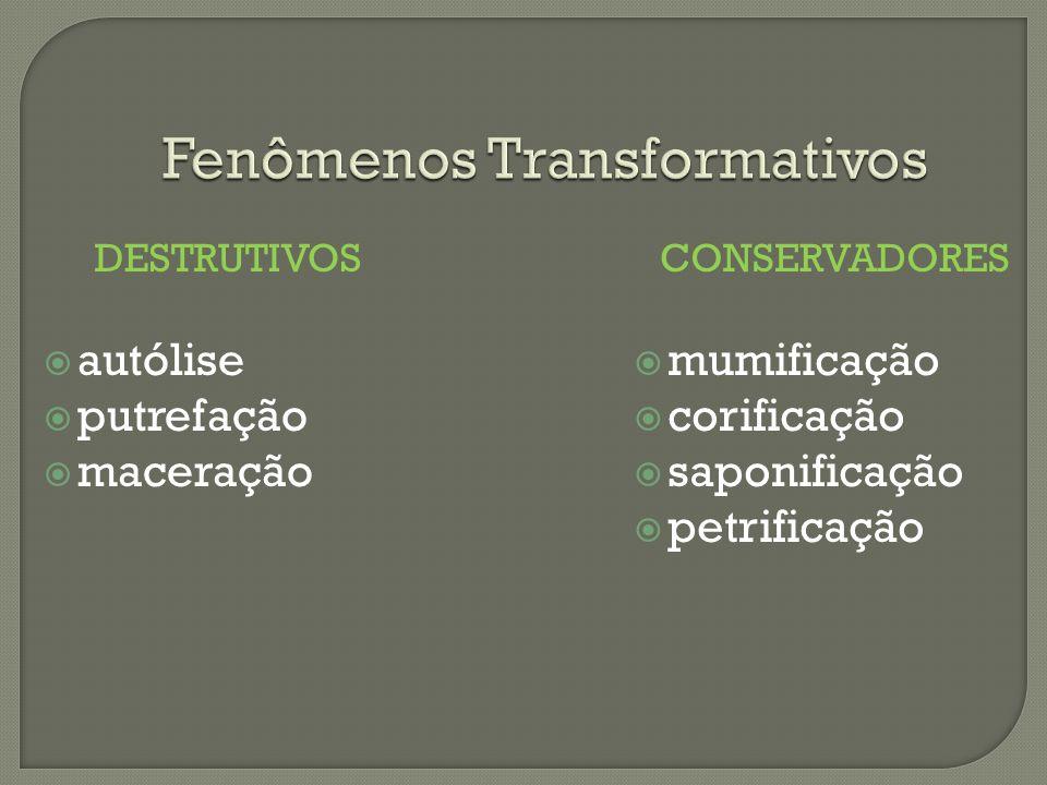 Fenômenos Transformativos DESTRUTIVOS autólise putrefação maceração CONSERVADORES mumificação corificação saponificação petrificação