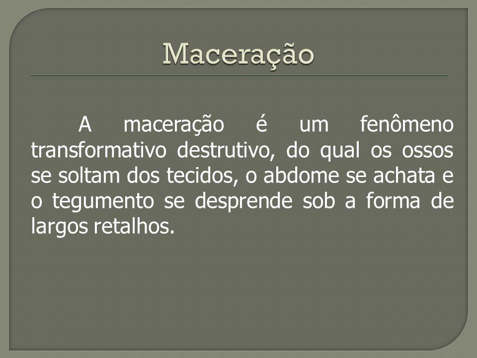A maceração é um fenômeno transformativo destrutivo, do qual os ossos se soltam dos tecidos, o abdome se achata e o tegumento se desprende sob a forma