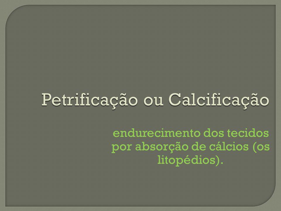 Petrificação ou Calcificação endurecimento dos tecidos por absorção de cálcios (os litopédios).