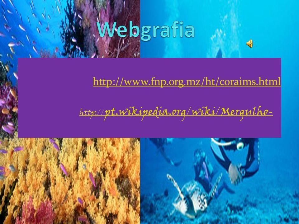 O nosso grupo concluiu: O mergulho em recifes requer muita prática ; Para aprender há as escolas de mergulho; Deve-se ter conhecimento dos habitats da