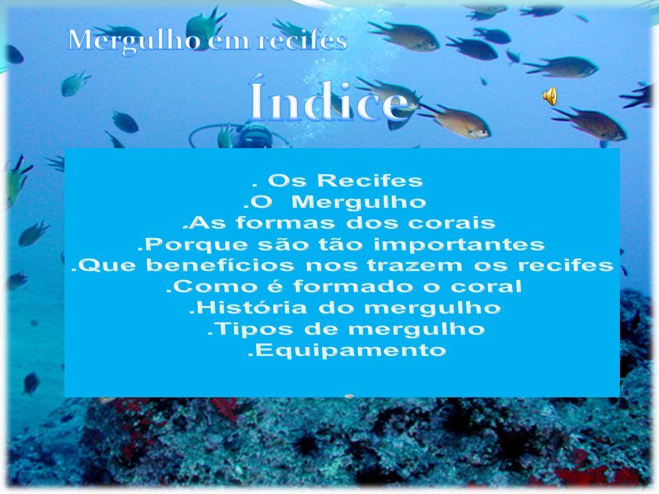 Existem três tipos de mergulho: livre, autónomo e o dependente ou semi-autónomo.