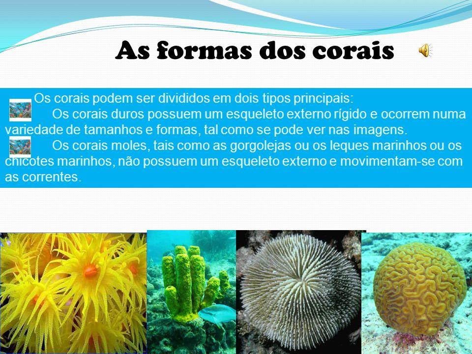 As formas dos corais Os corais podem ser divididos em dois tipos principais: Os corais duros possuem um esqueleto externo rígido e ocorrem numa variedade de tamanhos e formas, tal como se pode ver nas imagens.