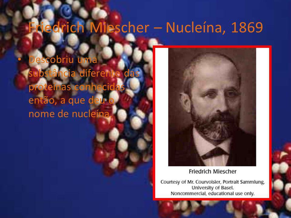 Friedrich Miescher – Nucleína, 1869 Descobriu uma substância diferente das proteínas conhecidas então, a que deu o nome de nucleína.