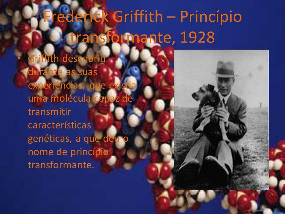 Frederick Griffith – Princípio transformante, 1928 Griffith descobriu durante as suas experiências, que existia uma molécula capaz de transmitir carac
