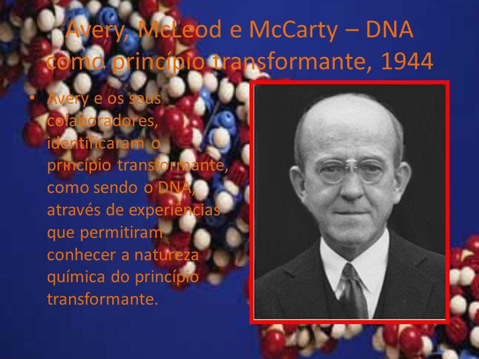 Avery, McLeod e McCarty – DNA como princípio transformante, 1944 Avery e os seus colaboradores, identificaram o princípio transformante, como sendo o