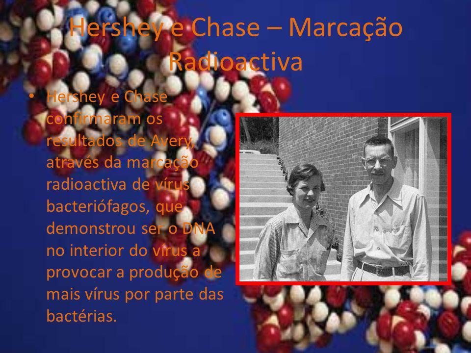 Hershey e Chase – Marcação Radioactiva Hershey e Chase confirmaram os resultados de Avery, através da marcação radioactiva de vírus bacteriófagos, que