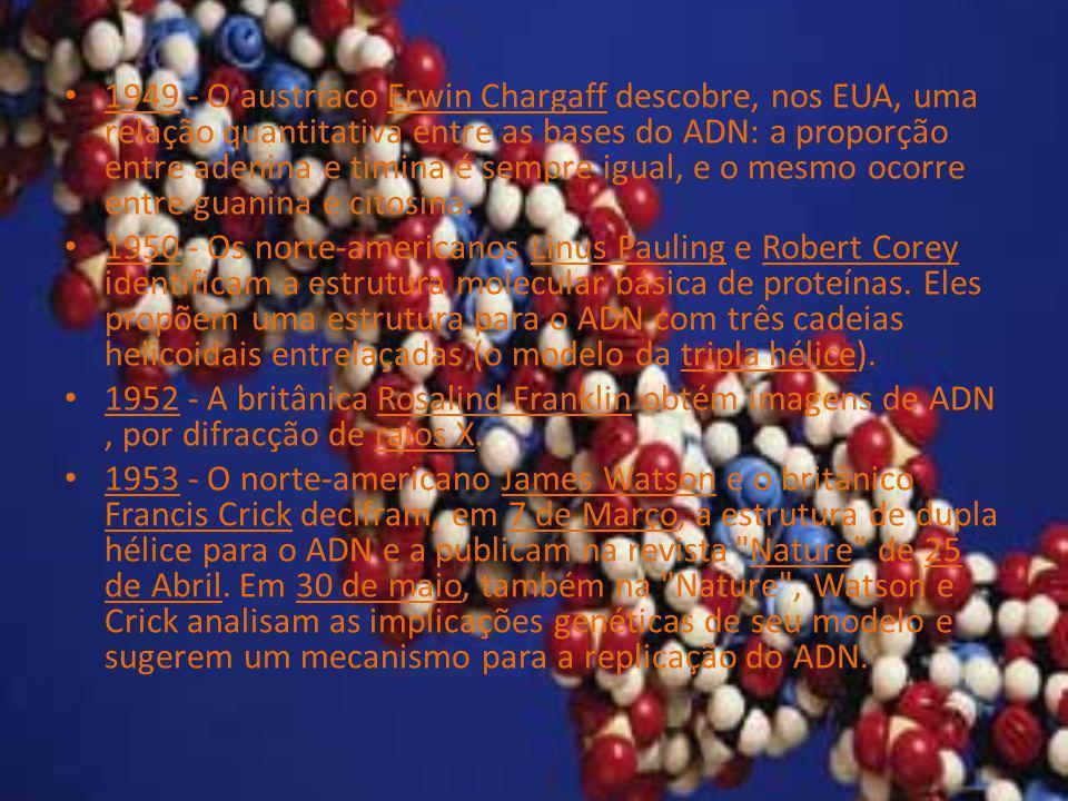 1949 - O austríaco Erwin Chargaff descobre, nos EUA, uma relação quantitativa entre as bases do ADN: a proporção entre adenina e timina é sempre igual