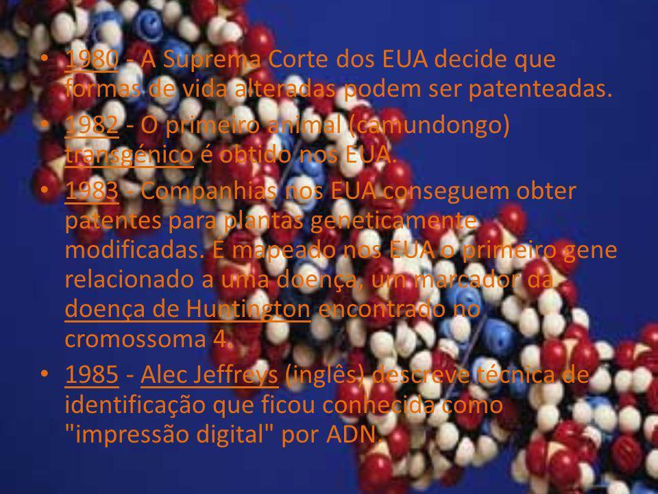 1980 - A Suprema Corte dos EUA decide que formas de vida alteradas podem ser patenteadas. 1982 - O primeiro animal (camundongo) transgénico é obtido n