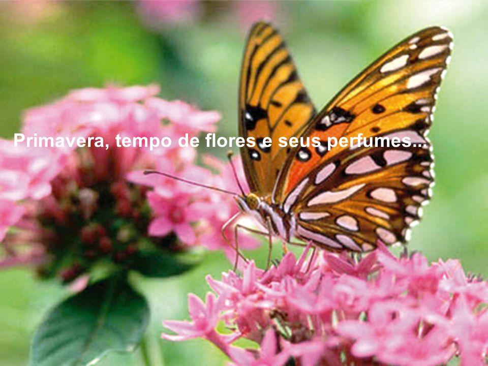 Primavera, tempo de flores e seus perfumes...