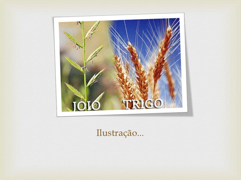 O semeador: Mt 13, 5-8 O joio: Mt 13, 24-30 O grão de Mostarda: Mt 13, 31-32 O fermento: Mt 13, 33 O tesouro escondido: Mt 13, 44 A pérola: Mt 13, 45-46 A vela e o candelabro: Lc 11, 33ss A rede: Mt 13, 47-50 A semente: Mc 4,26-29 A dracma perdida: Lc 15, 8-10 As dez moedas: Lc 19, 12-27 Trabalho em Dupla