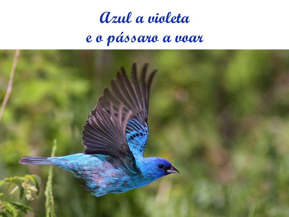 Azul a violeta e o pássaro a voar