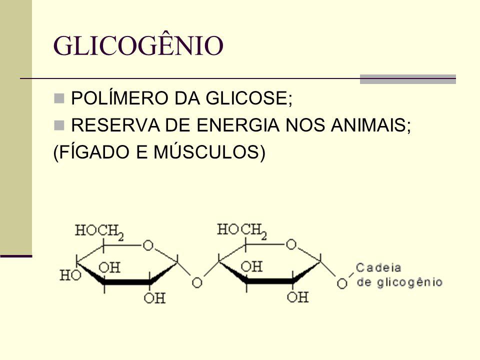 GLICOGÊNIO POLÍMERO DA GLICOSE; RESERVA DE ENERGIA NOS ANIMAIS; (FÍGADO E MÚSCULOS)
