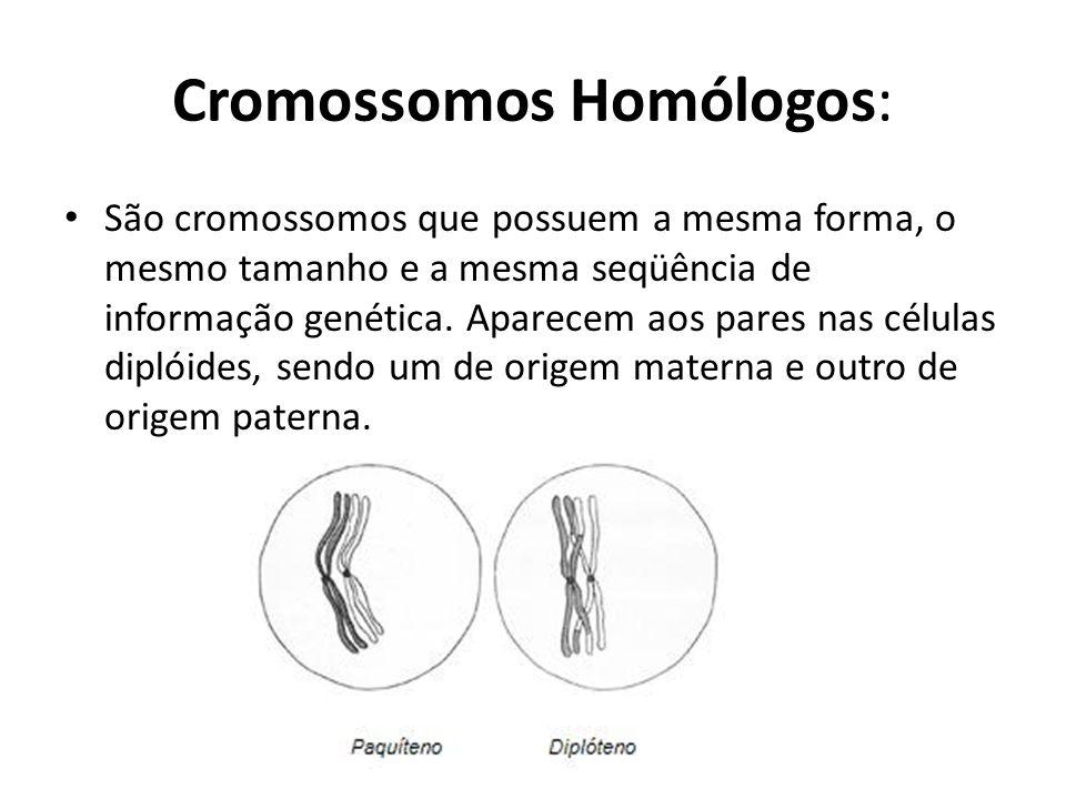 Cromossomos Homólogos: São cromossomos que possuem a mesma forma, o mesmo tamanho e a mesma seqüência de informação genética. Aparecem aos pares nas c