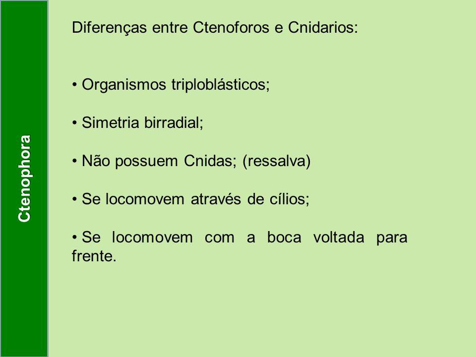 Diferenças entre Ctenoforos e Cnidarios: Organismos triploblásticos; Simetria birradial; Não possuem Cnidas; (ressalva) Se locomovem através de cílios