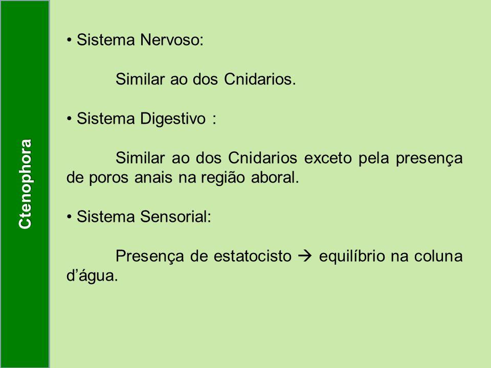 Sistema Nervoso: Similar ao dos Cnidarios. Sistema Digestivo : Similar ao dos Cnidarios exceto pela presença de poros anais na região aboral. Sistema