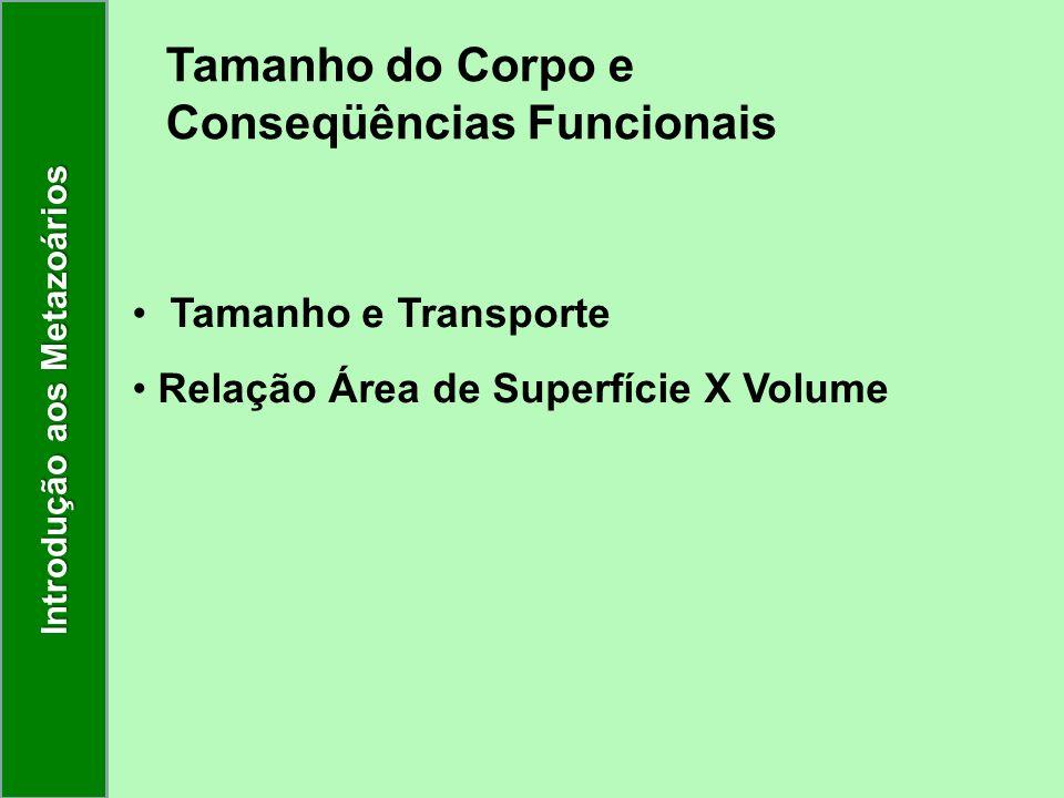 Tamanho do Corpo e Conseqüências Funcionais Tamanho e Transporte Relação Área de Superfície X Volume Introdução aos Metazoários