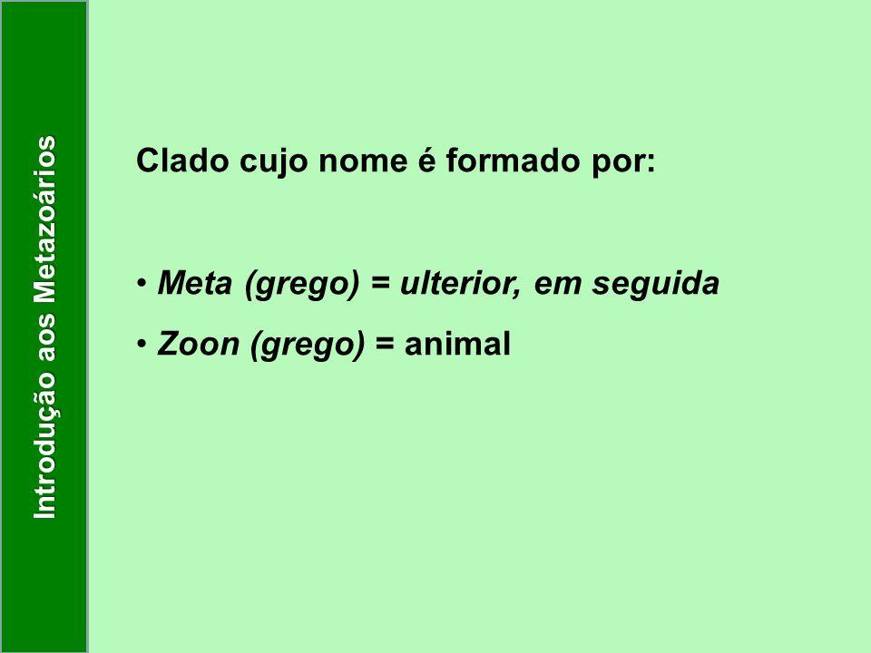 Clado cujo nome é formado por: Meta (grego) = ulterior, em seguida Zoon (grego) = animal Introdução aos Metazoários
