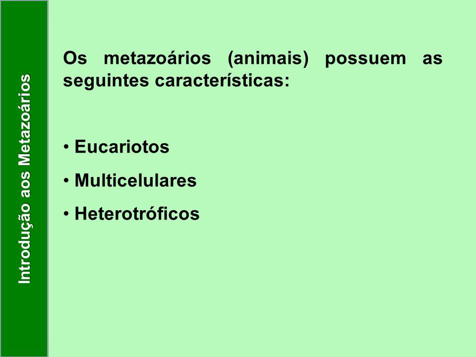 Os metazoários (animais) possuem as seguintes características: Eucariotos Multicelulares Heterotróficos Introdução aos Metazoários