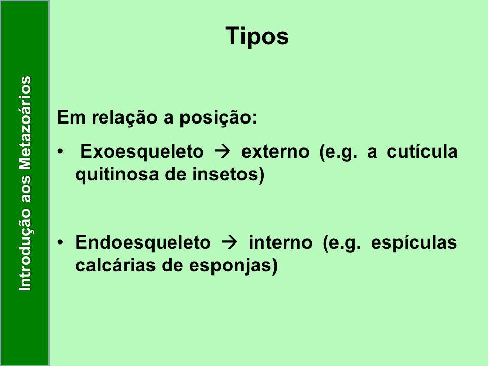 Tipos Em relação a posição: Exoesqueleto externo (e.g. a cutícula quitinosa de insetos) Endoesqueleto interno (e.g. espículas calcárias de esponjas) I