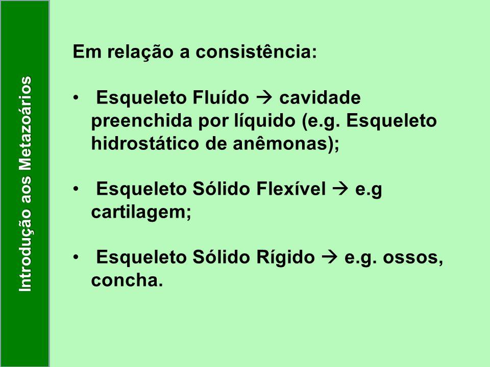 Em relação a consistência: Esqueleto Fluído cavidade preenchida por líquido (e.g. Esqueleto hidrostático de anêmonas); Esqueleto Sólido Flexível e.g c
