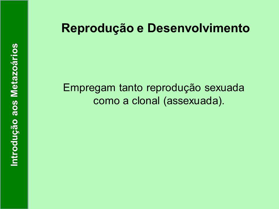 Reprodução e Desenvolvimento Empregam tanto reprodução sexuada como a clonal (assexuada). Introdução aos Metazoários