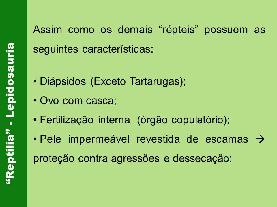 Reptilia - Lepidosauria Assim como os demais répteis possuem as seguintes características: Diápsidos (Exceto Tartarugas); Ovo com casca; Fertilização